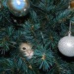 SilentSunday 16/12/2012