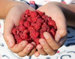 raspberry-995344_1920