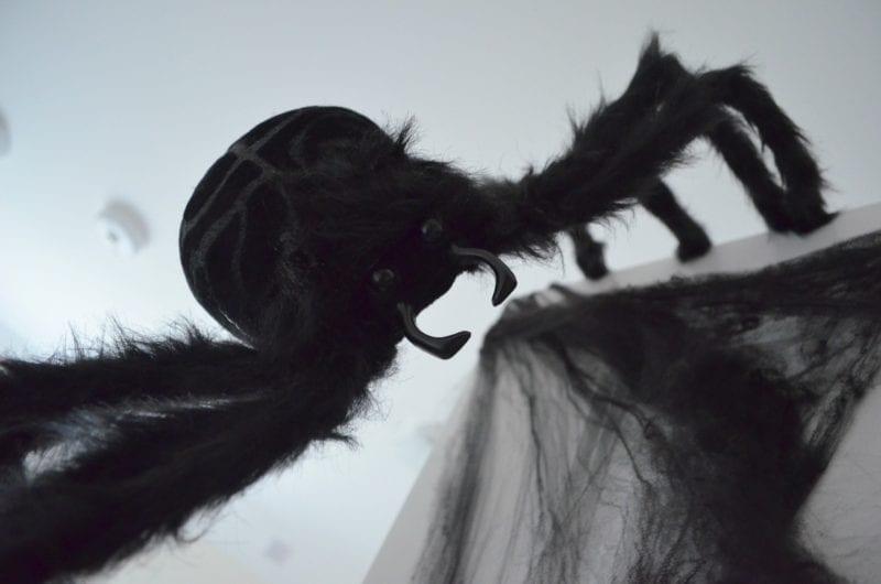 wilko-halloween-gigantic-spider