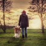 5 Dog Friendly Walks In The Lake District