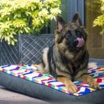 Bring Colour And Comfort To Your Home With A Designer Dog Bed